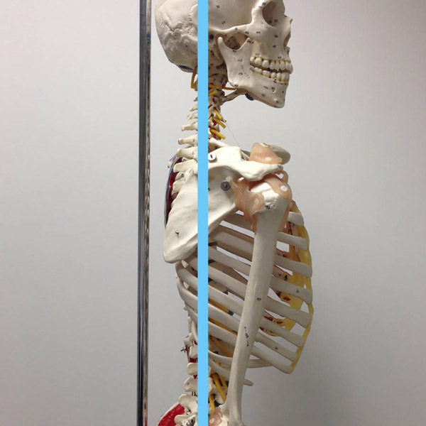 Neutral Spine