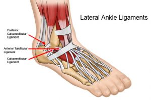 Ankle Ligs-Compressed